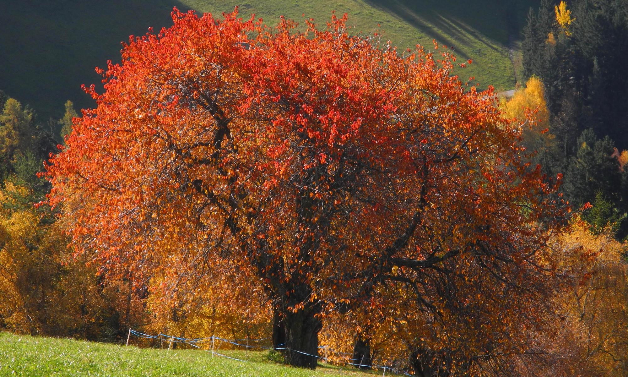 Der Herbst mit all seinen Farbenspielen