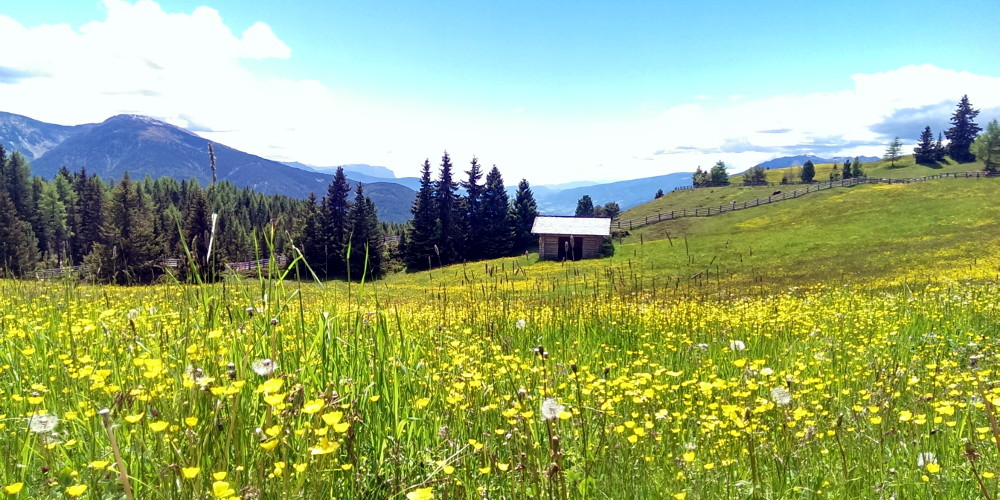 Der Frühling in Lüsen lässt das ganze Tal erstrahlen